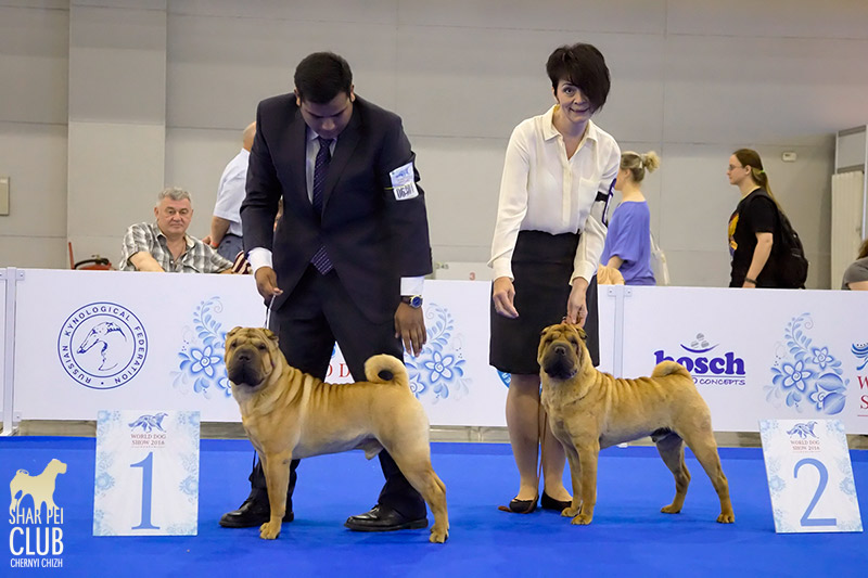 WORLD DOG SHOW 2016 шарпеи, ринг кобелей